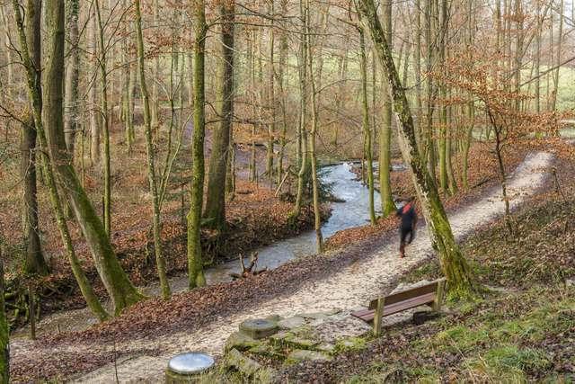 Auf dem Vitaparcours im Binninger Teil des Allschwiler Waldes.