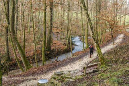 Parcours Vita, forêt d'Allschwil